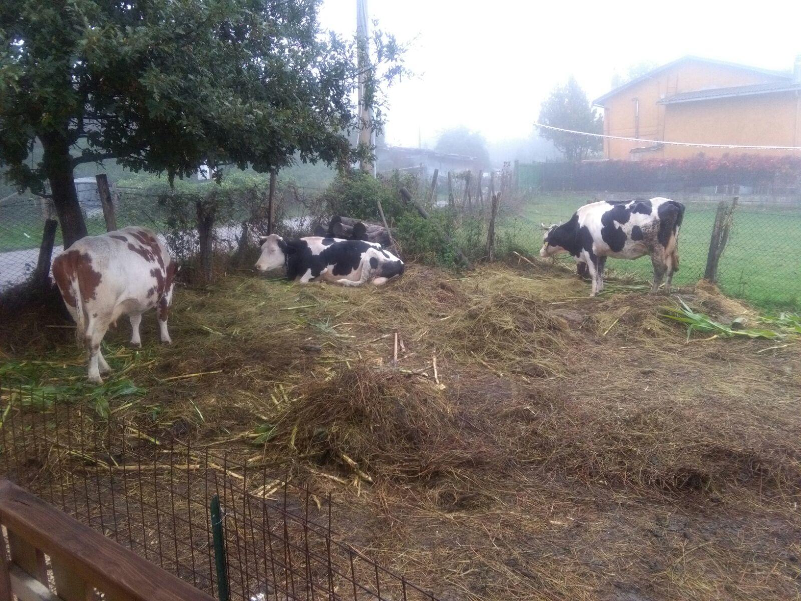 Sisma: Continua emergenza per allevatori del reatino
